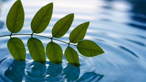 peaceful-mind-meditation