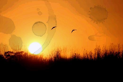 birdsflight