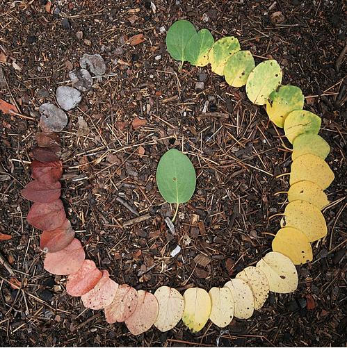 circle-of-leaf