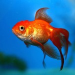 John The Fish