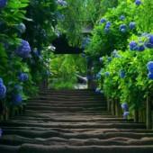 garden-of-peacefulness-e1382131770510